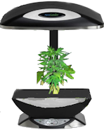 AreoGrow AeroGarden for medical marijuana