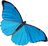blue butterfly (collection)