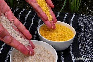 Untested GMO rice - Greenpeace