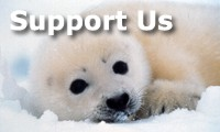 Support the Sea Shepherd Conservation Society
