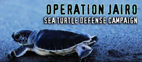 Protecting the Sea Turtles