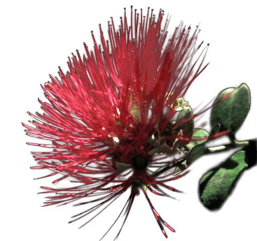 PNG flower with variable transparency